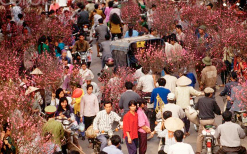 北部の梅木の市場